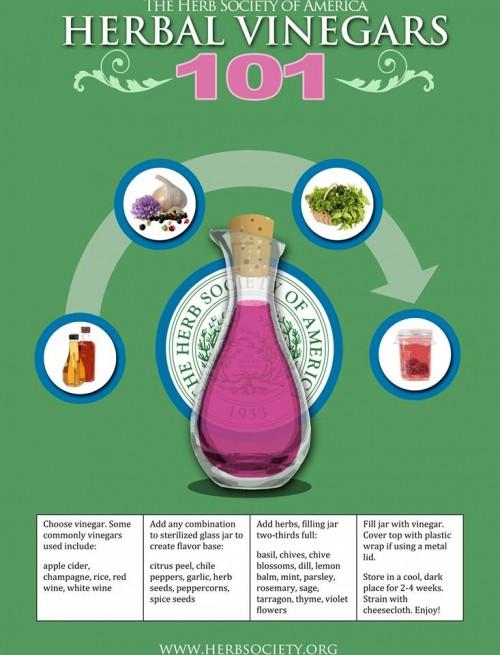 Herb Vinegar Illustration