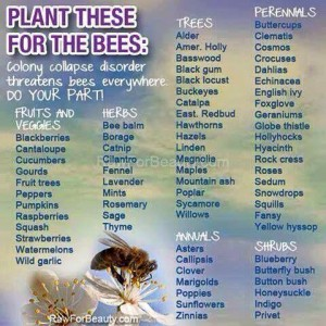 plants-for-bees_2016